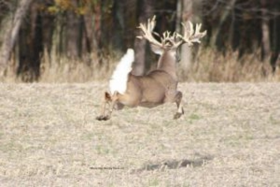 Whitetail Deer Hunting Ranch: A Quick Guide for the Novices